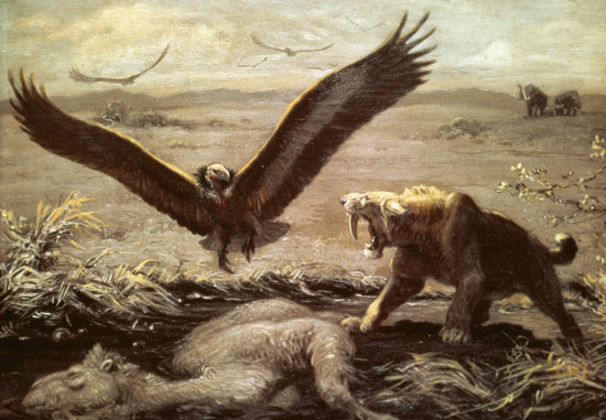 Smilodon, vulture, came, Charles R Knight, painting, paleontology, tar pits