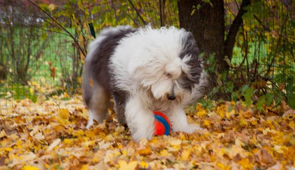 A wonderfully friendly delightful dog